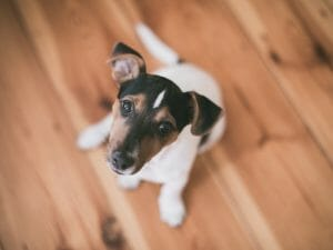 How to become a foster carer for pet rescue