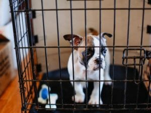 Basics of crate training